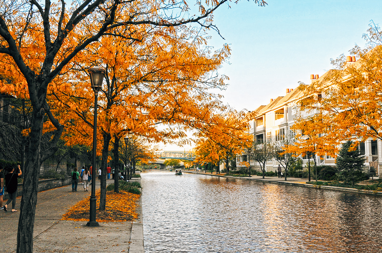 orange autumn leaves on trees along canal